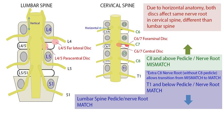 difference between manual and special orthopedic tests